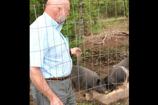 Chuck Crimmins feeds Bacon and Sausage, the two pigs his family is raising for meat.