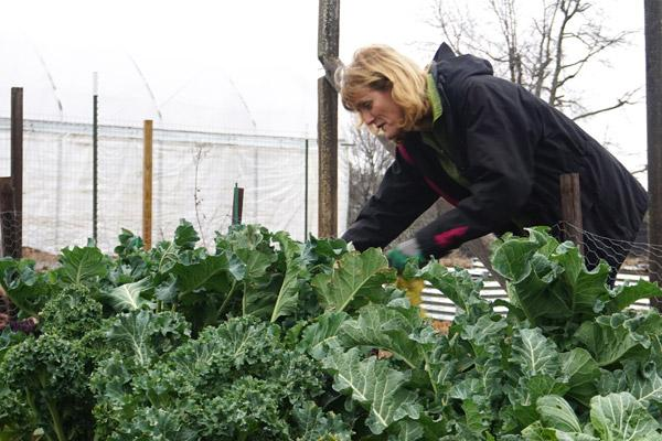 Urban farming blooms in the winter in North Little Rock